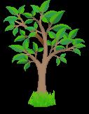kasvavat-puut-3